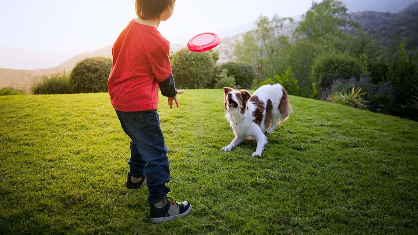 Hills Pet Nutrition Hunde Und Katzenfutter Das Leben Transformiert Block Diagram Of Multimeter Informieren Sie Sich In Diesen Artikeln Ber Mglichkeiten Wie Ihren Hund Beschftigen Knnen