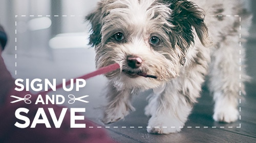 Hills Pet Nutrition Hunde Und Katzenfutter Das Leben Transformiert