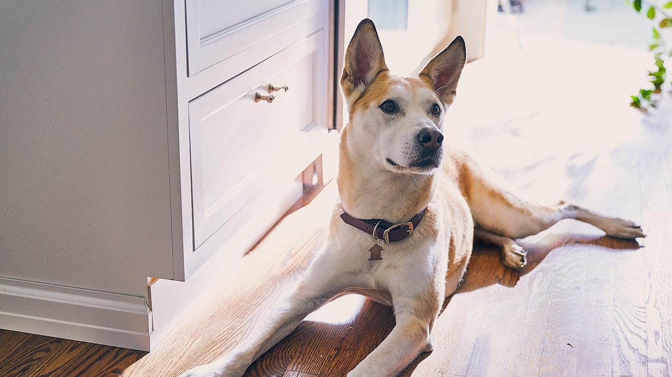 Hills Pet Nutrition Hunde Und Katzenfutter Das Leben Transformiert Block Diagram Of Multimeter Sie Suchen Nach Dem Besten Hundefutter Beginnen Damit Einige Dieser Artikel Zu Lesen