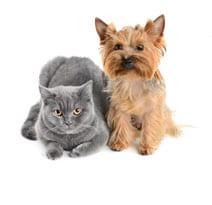 Hill\'s Pet Nutrition - Hunde- und Katzenfutter, das Leben transformiert